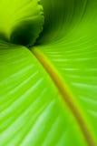 Dentro de uma folha da banana Fotografia de Stock