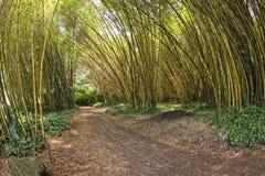 Dentro de un bosque de bambú Foto de archivo libre de regalías