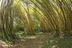 Dentro de un bosque de bambú Imagen de archivo libre de regalías
