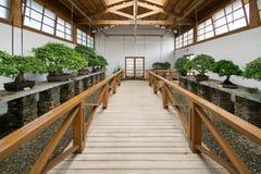 Dentro de un jardín de los bonsais Imagen de archivo libre de regalías