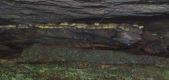 Dentro de una guarida de la serpiente de cascabel Foto de archivo libre de regalías