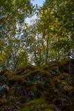 Dentro de verano bosque carelio mezclado Imagenes de archivo