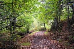 Dentro del bosque Fotografía de archivo
