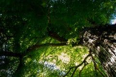 Dentro del bosque Fotografía de archivo libre de regalías