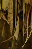 Dentro del bosque Fotos de archivo