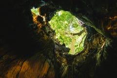 Dentro del cuerpo de un bosque grande del árbol bajo la lluvia fotografía de archivo libre de regalías
