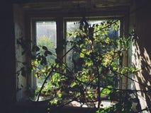 Dentro del edificio de la izquierda y del campamento de verano soviético olvidado Skazka no lejos de Moscú Fotos de archivo libres de regalías