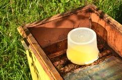 Dentro del envase de la colmena con el jarabe dulce para las abejas de alimentación Fotos de archivo libres de regalías