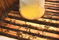 Dentro del envase de la colmena con el jarabe dulce para las abejas de alimentación Fotografía de archivo libre de regalías