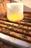 Dentro del envase de la colmena con el jarabe dulce para las abejas de alimentación Imagen de archivo