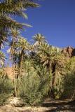 Dentro del oasis de Tinghir Foto de archivo