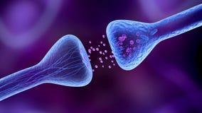 Dentro do cérebro - receptor ativo ilustração royalty free