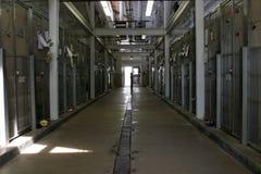 Dentro do corredor de um abrigo animal que mostra gaiolas Fotos de Stock Royalty Free