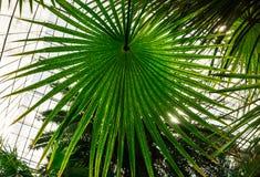 Dentro do jardim botânico Imagem de Stock