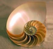 Dentro do nautilus Imagens de Stock
