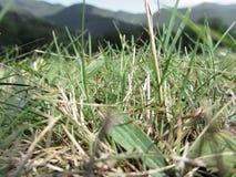 Dentro, l'erba verde fertile germoglia dappertutto di estate Immagini Stock