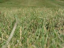 Dentro, l'erba verde fertile germoglia dappertutto di estate Fotografia Stock