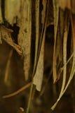 Dentro la foresta Fotografie Stock