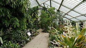 Dentro la serra del Principessa del Galles ai giardini Londra di Kew Fotografie Stock