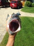 Dentro un pesce serra Immagini Stock