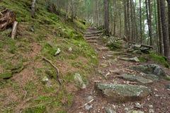 Dentro una foresta tipica delle alpi italiane Immagine Stock Libera da Diritti