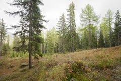 Dentro una foresta tipica delle alpi italiane Fotografia Stock