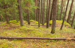 Dentro una foresta tipica delle alpi italiane Fotografie Stock Libere da Diritti
