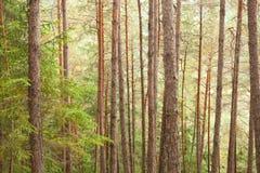 Dentro una foresta tipica delle alpi italiane Immagini Stock Libere da Diritti