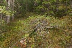 Dentro una foresta tipica delle alpi italiane Fotografia Stock Libera da Diritti