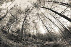 Dentro una foresta tipica delle alpi italiane (atmophere d'annata) Fotografie Stock Libere da Diritti