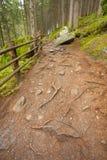 Dentro una foresta tipica delle alpi italiane un percorso vi porta il lo Fotografia Stock