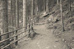 Dentro una foresta tipica delle alpi italiane un percorso vi porta il lo Fotografia Stock Libera da Diritti