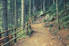 Dentro una foresta tipica delle alpi italiane un percorso vi porta il lo Immagine Stock