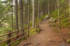 Dentro una foresta tipica delle alpi italiane un percorso vi porta il lo Immagini Stock