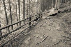 Dentro una foresta tipica delle alpi italiane un percorso vi porta il lo Immagini Stock Libere da Diritti