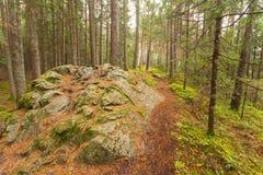 Dentro una foresta tipica delle alpi italiane un percorso vi porta lungamente il legno Immagine Stock Libera da Diritti