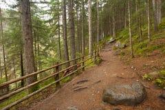 Dentro una foresta tipica delle alpi italiane un percorso vi porta lungamente il legno Fotografia Stock