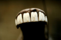 Dents de cheval images libres de droits