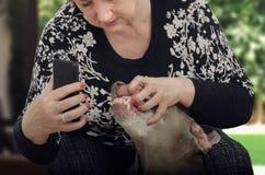 Dents de chien de tir de femme plus âgée pour le vétérinaire photographie stock libre de droits