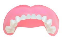 Dents de la mâchoire supérieure. illustration de vecteur