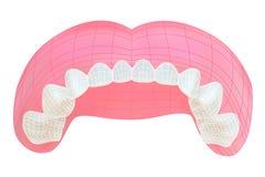 Dents de la mâchoire supérieure Images libres de droits
