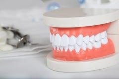 Dents et modèle de mâchoire closeup photographie stock libre de droits