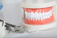 Dents et modèle de mâchoire closeup photos stock