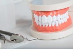 Dents et modèle de mâchoire closeup images stock