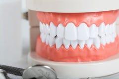 Dents et modèle de mâchoire closeup images libres de droits