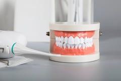 Dents et modèle de mâchoire closeup photo libre de droits