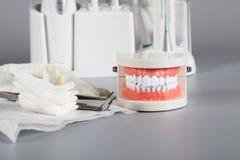 Dents et modèle de mâchoire closeup image stock