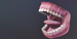 Dents humaines, bouche ouverte Illustration médicalement précise de la dent 3D illustration de vecteur