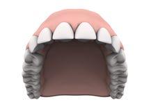 Dents supérieures avec des gommes Images stock