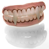 Denture. A denture of a vampire on a white background stock photos